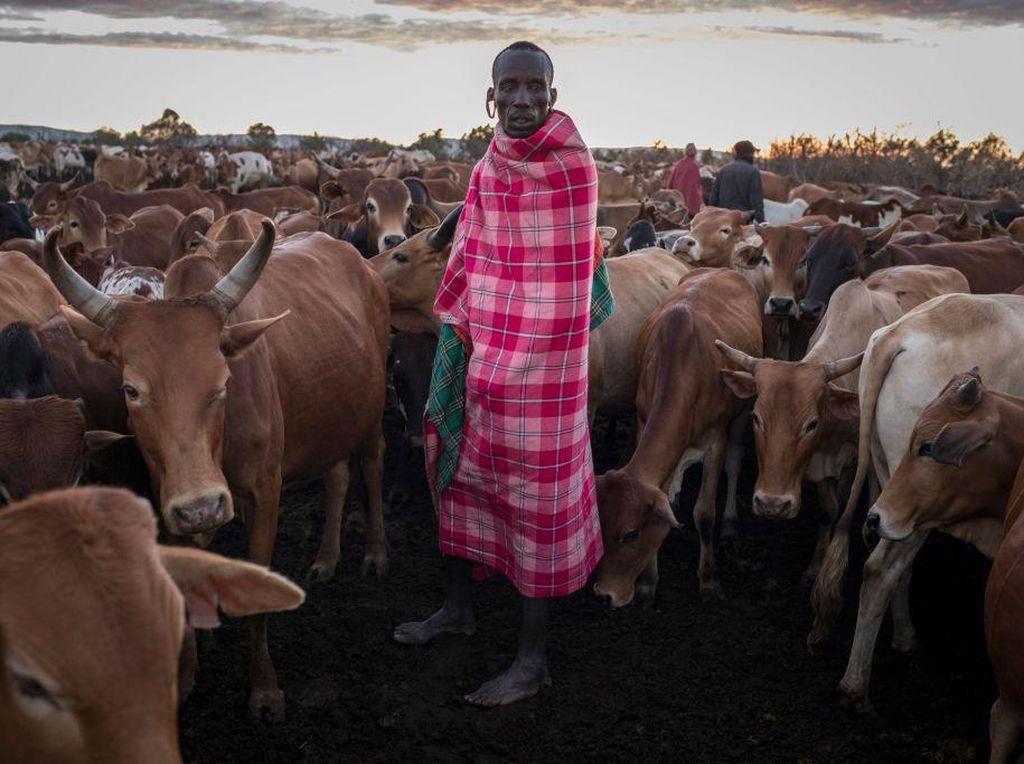 Wisata Margasatwa di Kenya Anjlok Gegara Corona