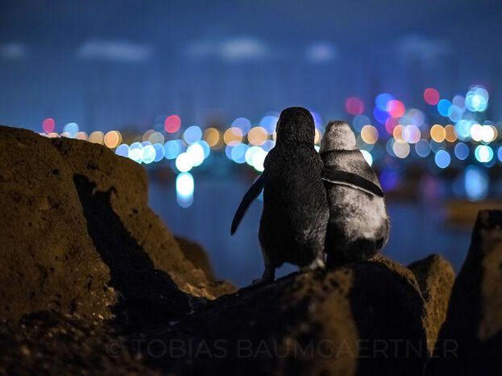 Karya Jawara Ocean Photography Awards Pukau Mata
