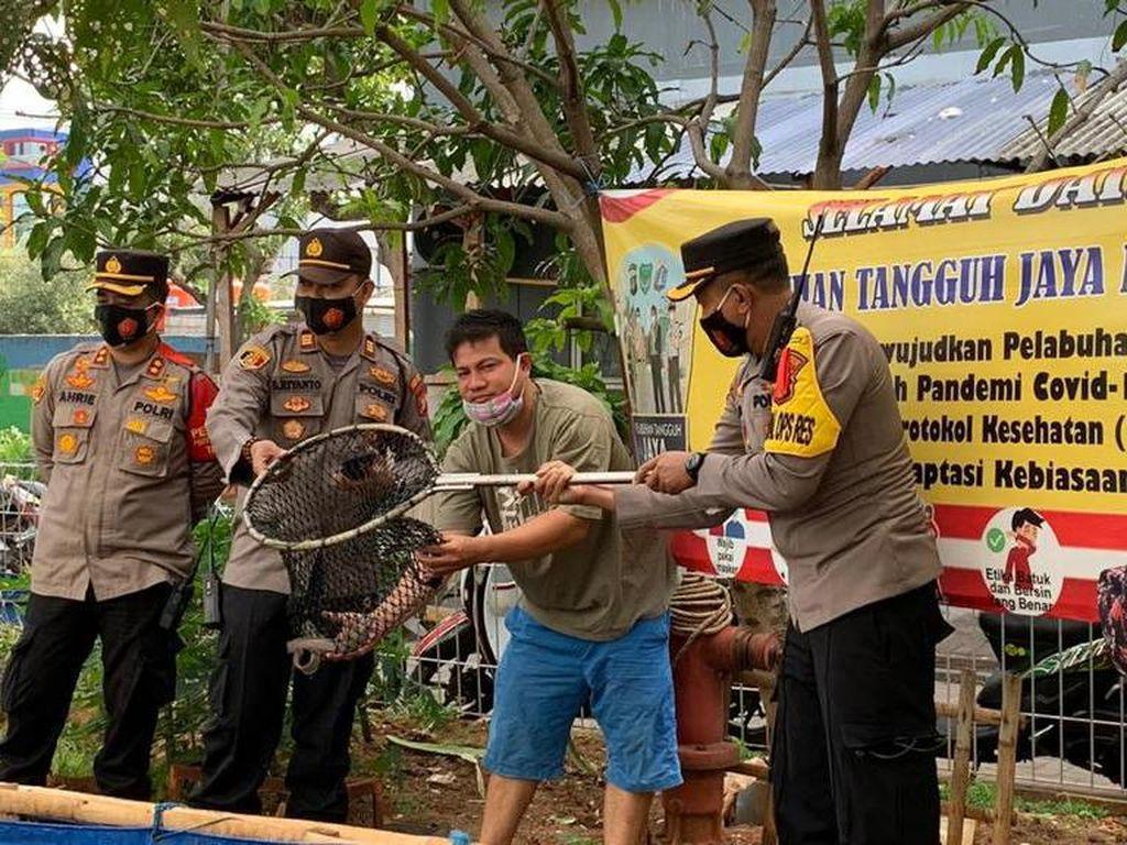 Polres Pelabuhan Tj Priok Bagi Sembako hingga Panen Ikan di Kampung Tangguh