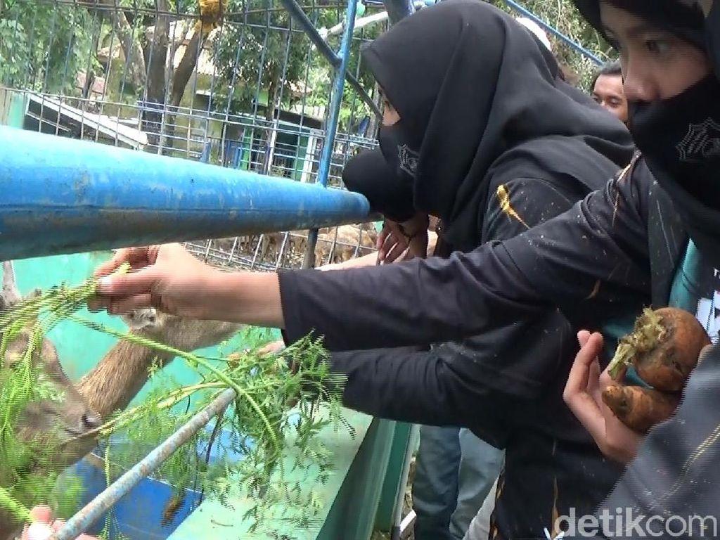 Terpuruk Akibat COVID, Siswa SMP Bantu Pakan Satwa di Serulingmas Zoo