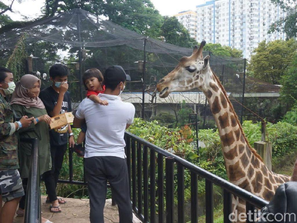 Libur Nataru, Begini Situasi Kebun Binatang Bandung Sabtu Ini