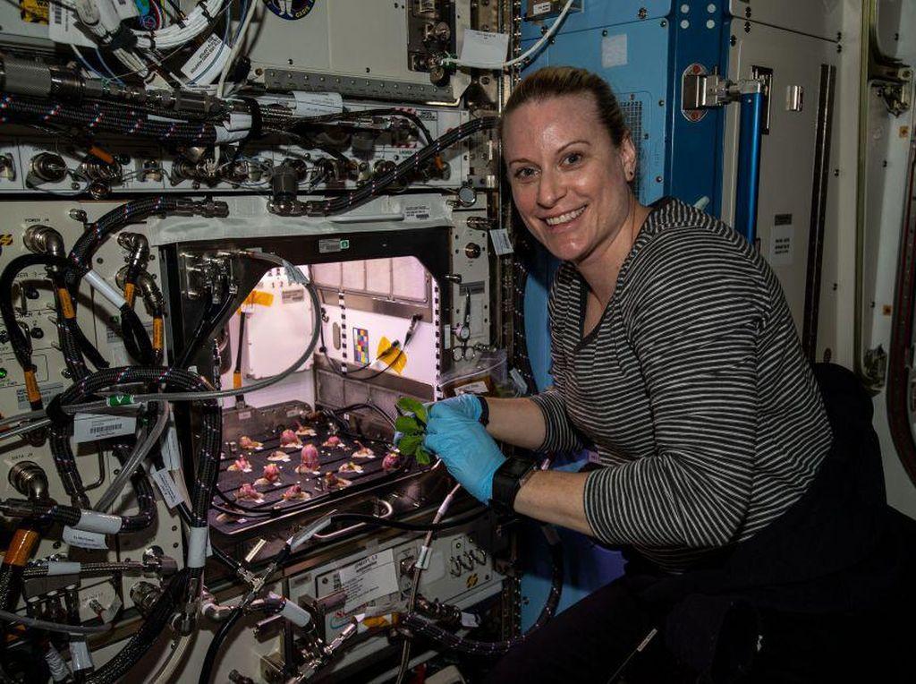 Astronaut Panen Lobak Rasa Luar Angkasa