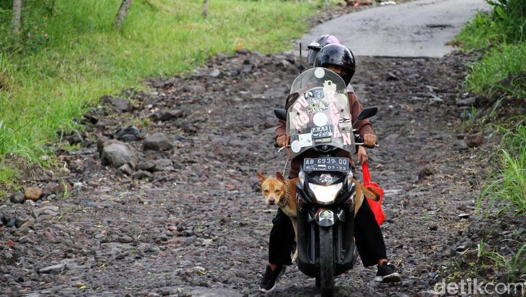 Daya Pikat Merapi dan Anjing Kesayangan