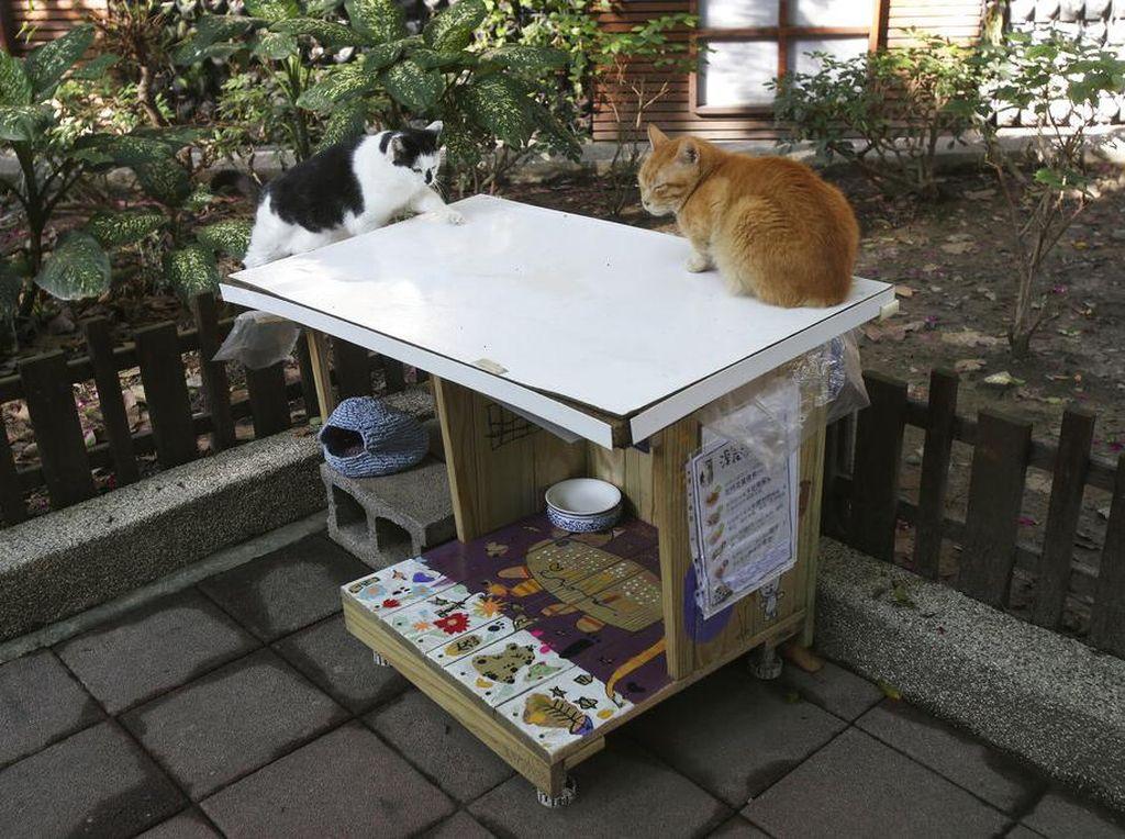 Unik! Ada Kantin untuk Kucing Liar di Taiwan