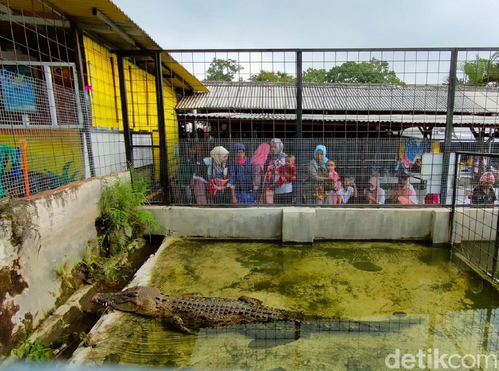 Mini Zoo di Kuningan Bisa Jadi Pilihan Nikmati Liburan Awal Tahun