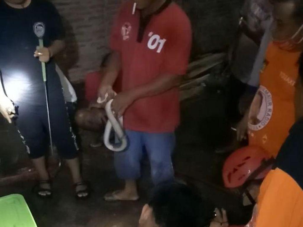 Hii... 4 Anak-2 Induk Ular Kobra Ditemukan di Gorong-gorong Klaten