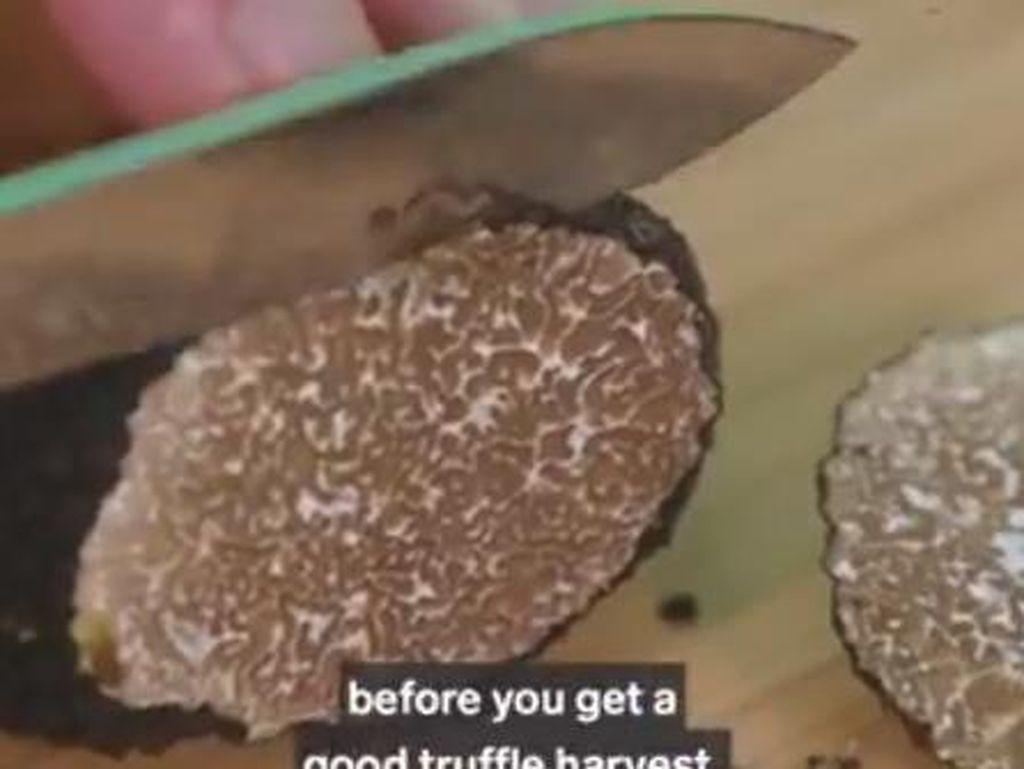 White Truffle Dijual Rp 56 Juta per Kg, Kenapa Bisa Mahal?