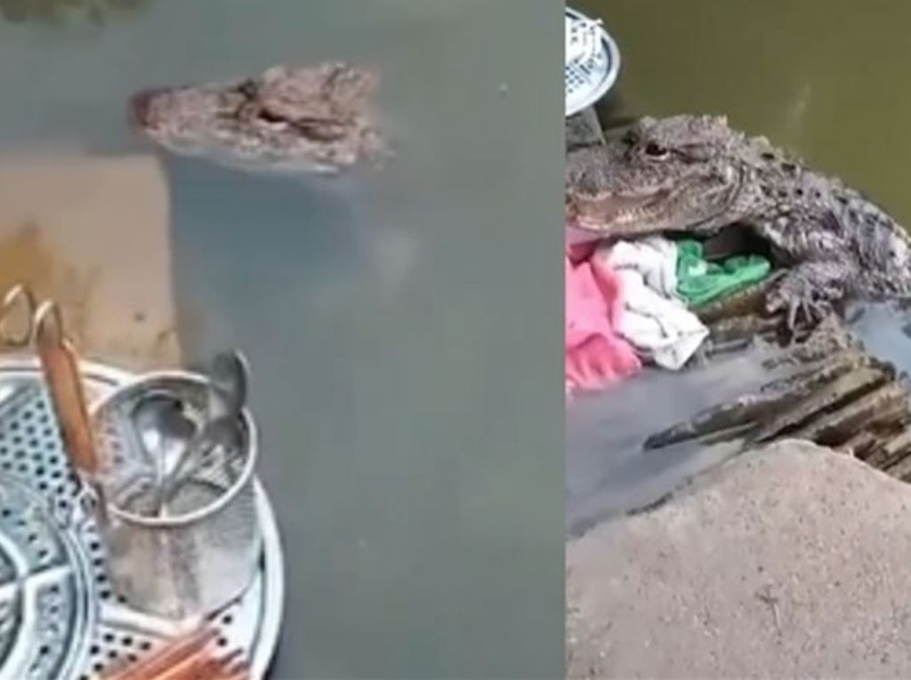 Santuy! Wanita Ini Cuci Piring di Sungai Ditemani Buaya