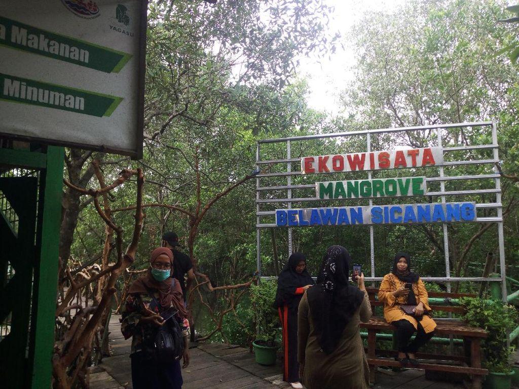 Libur Tahun Baru, Ekowisata Mangrove Belawan Sicanang Ramai Dikunjungi