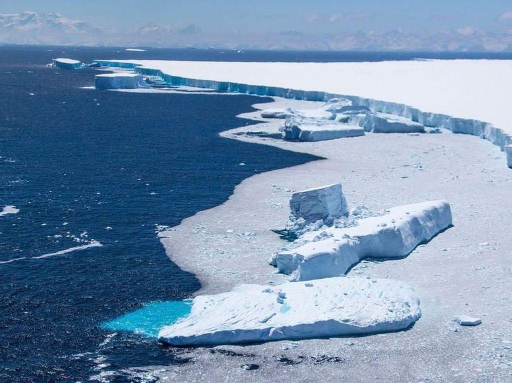 Bongkahan Gunung Es Raksasa Ancam Populasi Jutaan Hewan