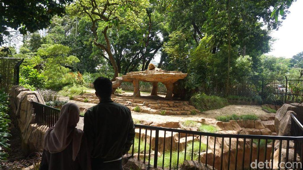 Berani Coba? Restoran Ini Suguhkan Sensasi Makan di Depan Kandang Singa