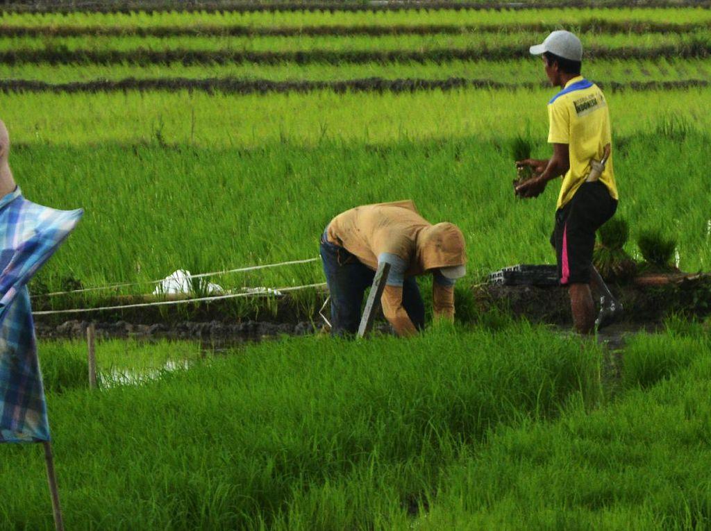 Sebagian Besar Penduduk di Kawasan Asia Tenggara Bermata Pencaharian Apa?