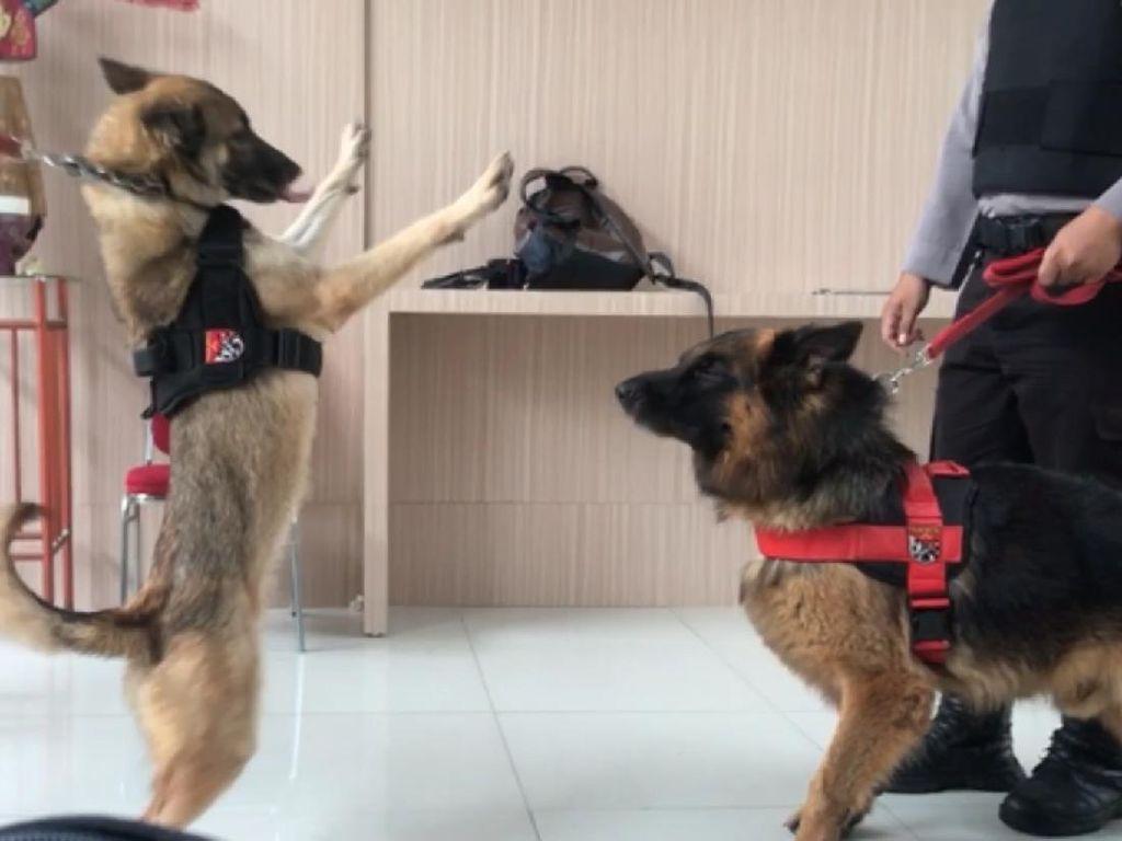 Anjing K9 hingga Tim Gegana Kawal Sidang Lanjutan Praperadilan Rizieq