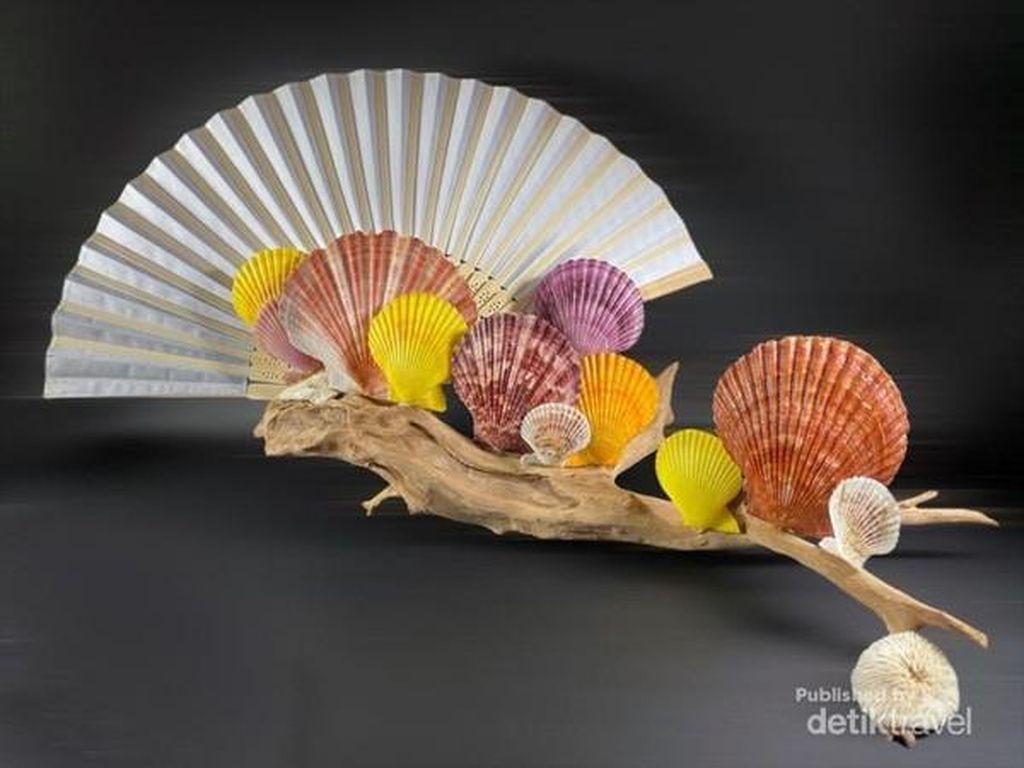 Begini Cara Menekuni Hobi Koleksi Cangkang Keong