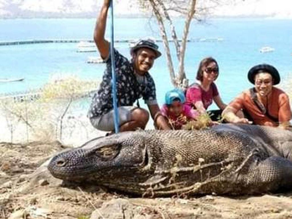 Kangen Komodo dan Panorama Sekitarnya, Coba Tengok Sini