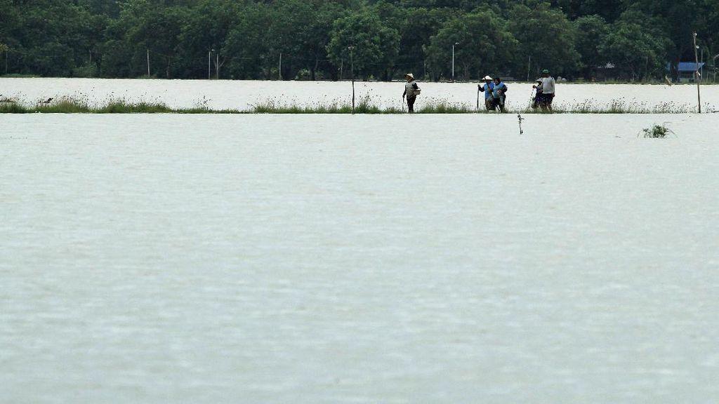 Terendam Banjir, Sawah di Indramayu Bak Lautan