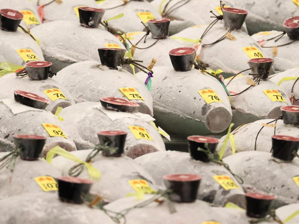 Lelang Tuna Sirip Biru di Jepang Terjual Rp 2,8 M