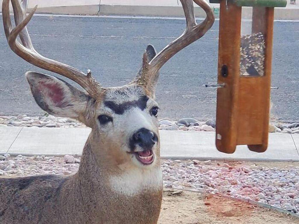 Yuk Tertawa Dulu Lihat Pose Hewan-hewan yang Tidak Sengaja Terpotret Ini