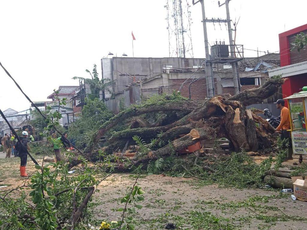 Waspada! Ini Lokasi Rawan Pohon Tumbang di Garut