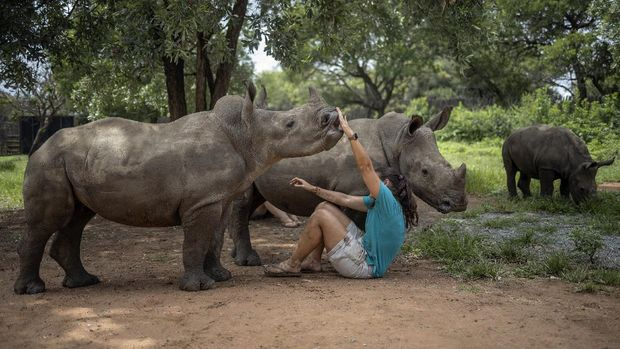 Carer Zanr Van Jaarsveld, 26, plays with a rhino calf at the Rhino Orphanage in an undisclosed location near Mokopane, Limpopo province, on January 9, 2021. Carefully hidden in the bush of South Africa's Limpopo province, the Rhino Orphanage is the first specialised non-commercial centre that cares for orphaned and injured baby rhinos - most of whom have lost their mothers shot dead by poachers for their valuable horns - with the aim of releasing them back into the wild. Rescue, rehabilitate, release: this is the motto that drives carers and volunteers living with the rhino calves they care for, at time sleeping with them for months, isolated from the outside world as the centre do not permit visitors due to fear of disclosing the location to poachers. (Photo by Michele Spatari / AFP)