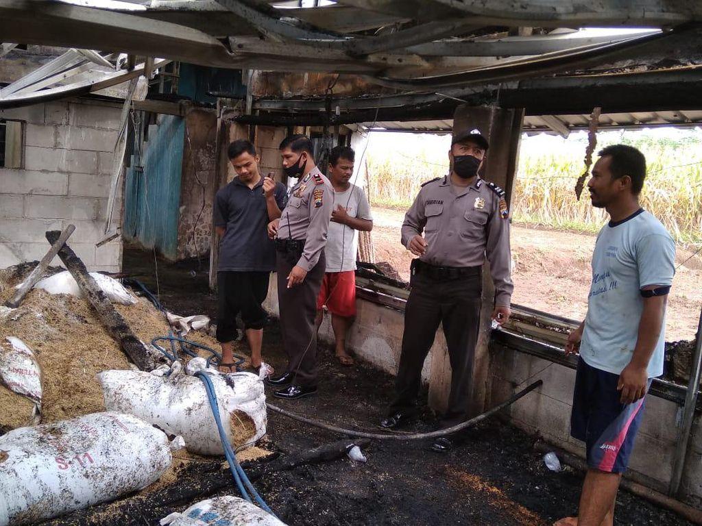 Kandang Peternakan Terbakar, 14 Ribu Ayam Mati Terpanggang