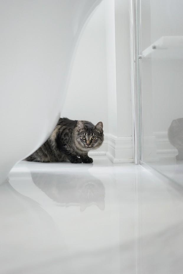 kucing kamar mandi
