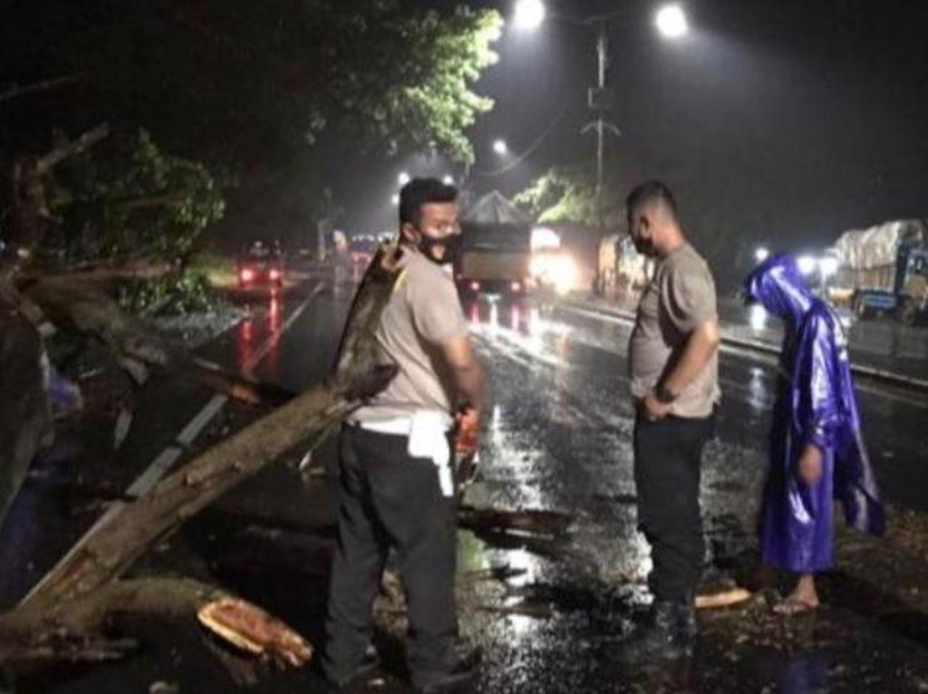 Pohon Tumbang di Jalingkut Pantura Pemalang, Lalu Lintas Sempat Tersendat