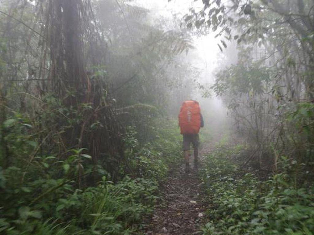 Jalan Panjang Menuju Puncak Gunung Argopuro