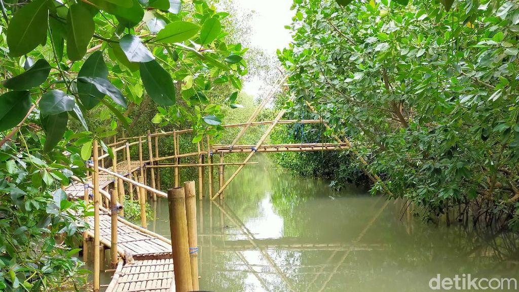 Foto: Pantai Tempat Konservasi Cemara, Penyu dan Bakau di Banyuwangi