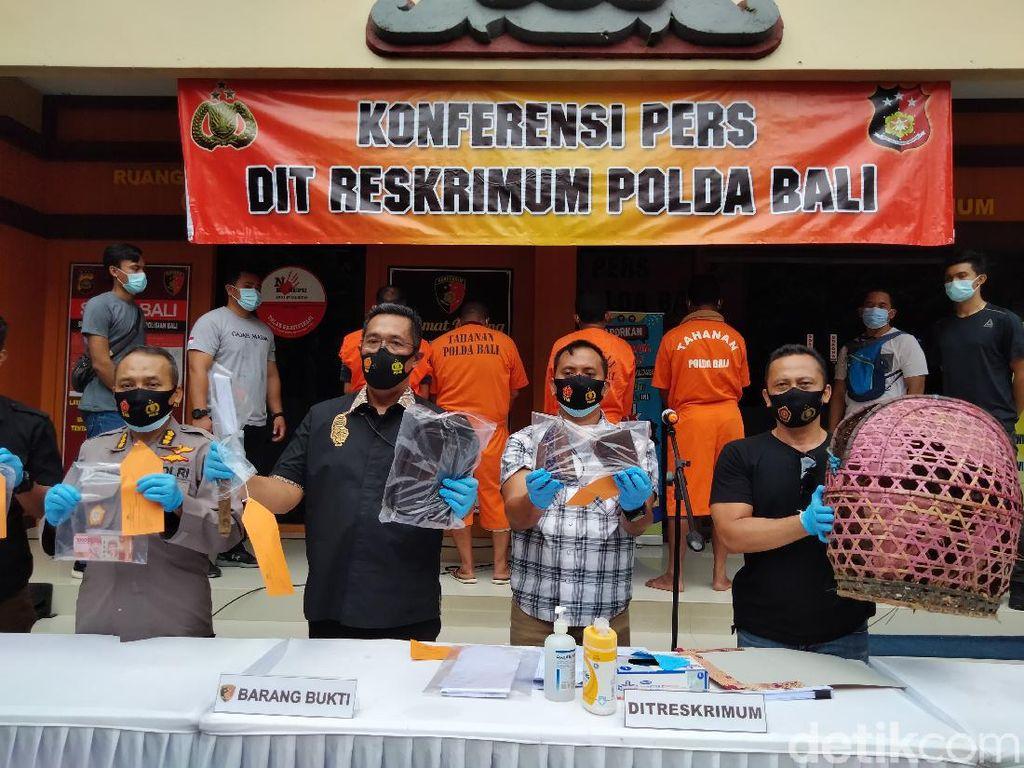 Sabung Ayam Saat Pandemi, 5 Warga Bali Dijerat UU Karantina Kesehatan