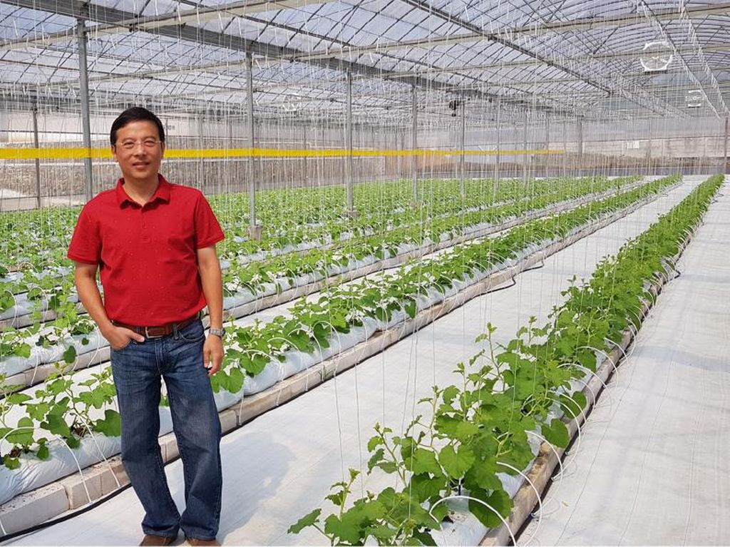Jadi Petani, Eks Bos Disc Tarra Cerita Kisah Sukses Tanam Sayur