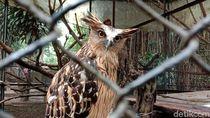 Jalan-jalan Seru di Akhir Pekan, ke Bandung Zoo Saja