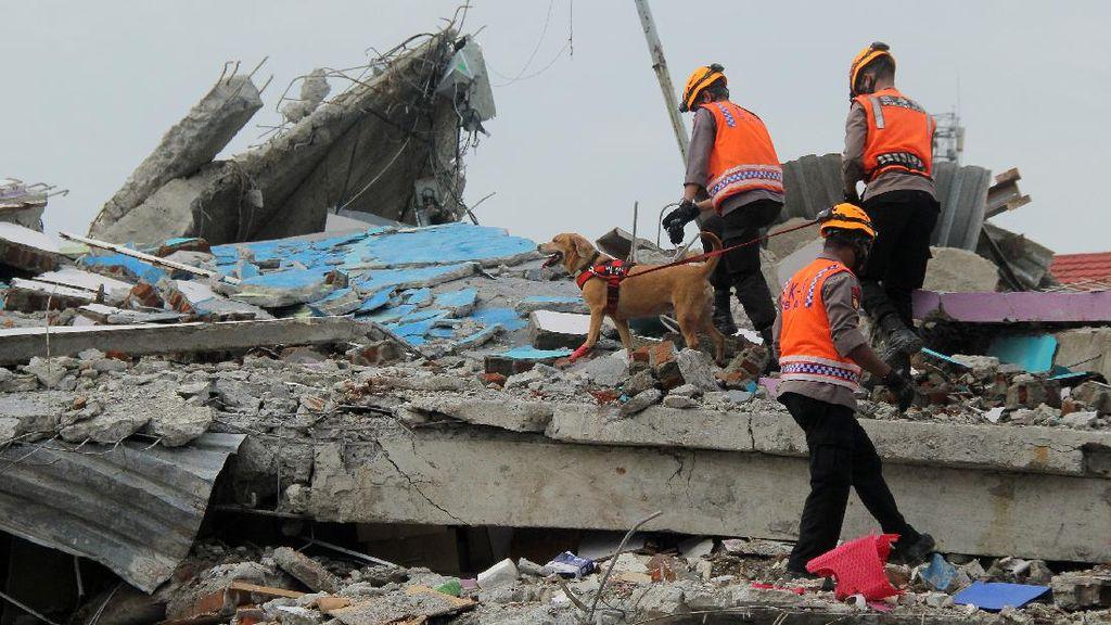 Anjing Pelacak Dikerahkan untuk Evakuasi Korban Gempa Mamuju
