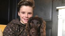 Anak David Beckham Bikin Netizen Ternganga, Jual Sweater Rusak Rp 2,1 M