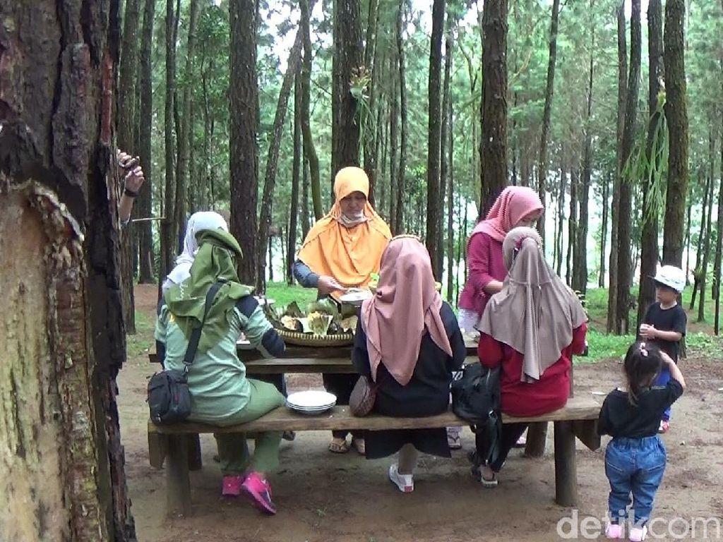 Nikmatnya Santap Nasi Jagung dan Pepes Telur di Tengah Hutan Pinus