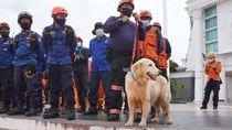 Basarnas Libatkan Anjing K9 dalam Pencarian Korban Gempa Sulbar
