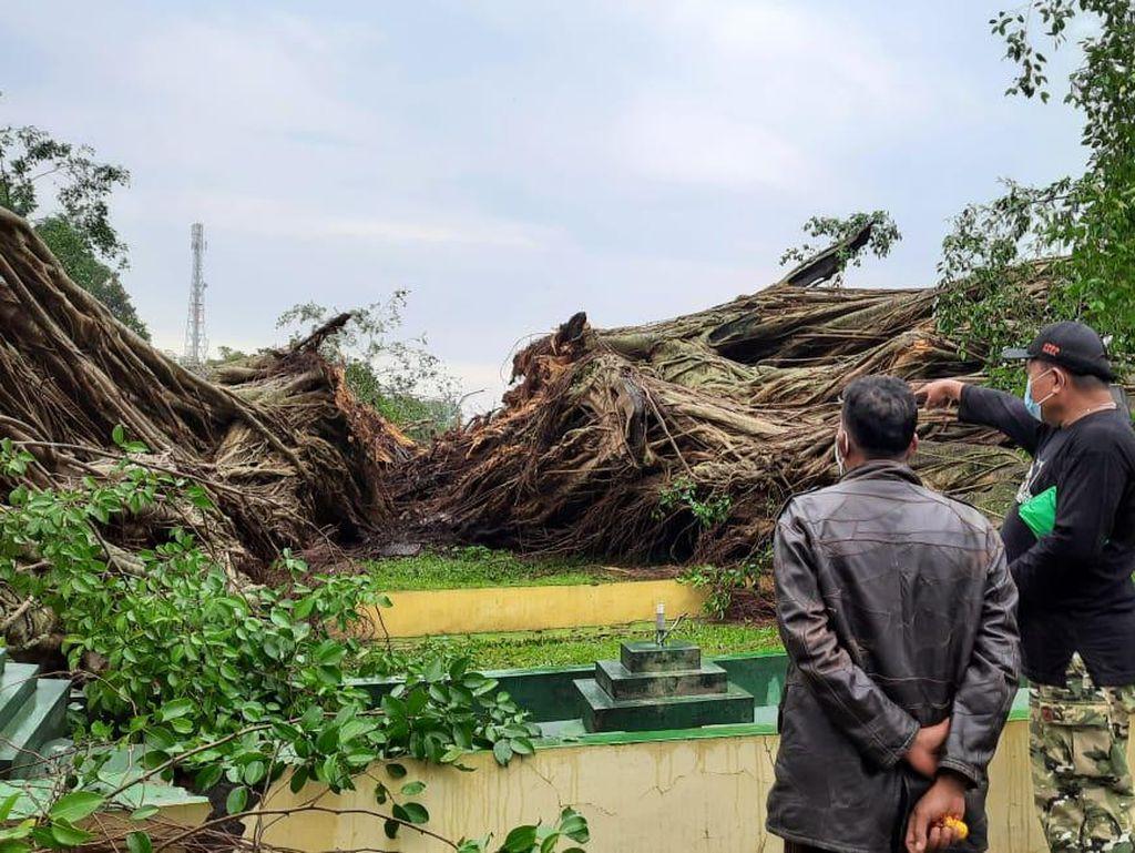 Beringin Berusia 141 Tahun di Alun-alun Lumajang Tumbang Terbelah Tiga