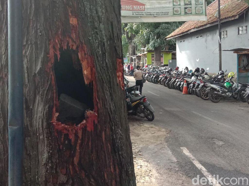 Heboh Batang Pohon Mahoni Tua di Bandung Keluarkan Api dan Asap