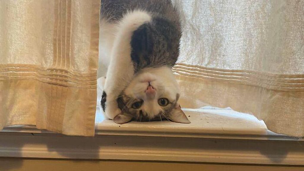 Gaya Kucing Paling Aneh dan Bikin Ngakak