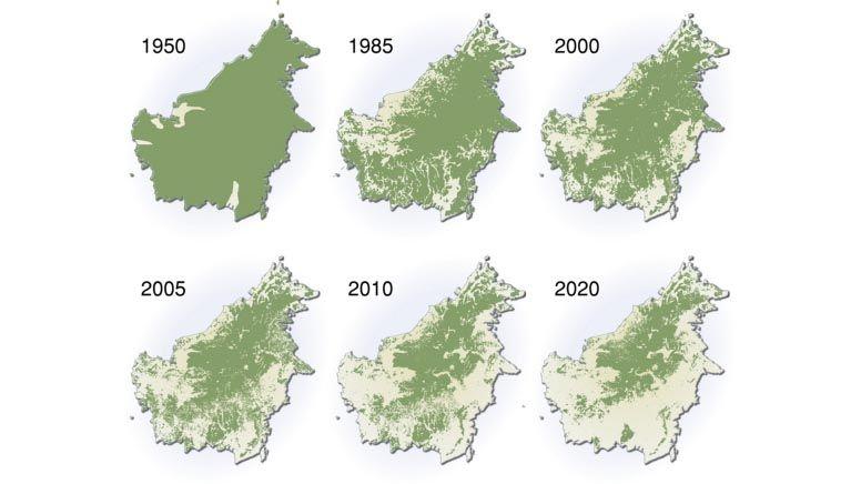 Deforestasi Hutan Kalimantan
