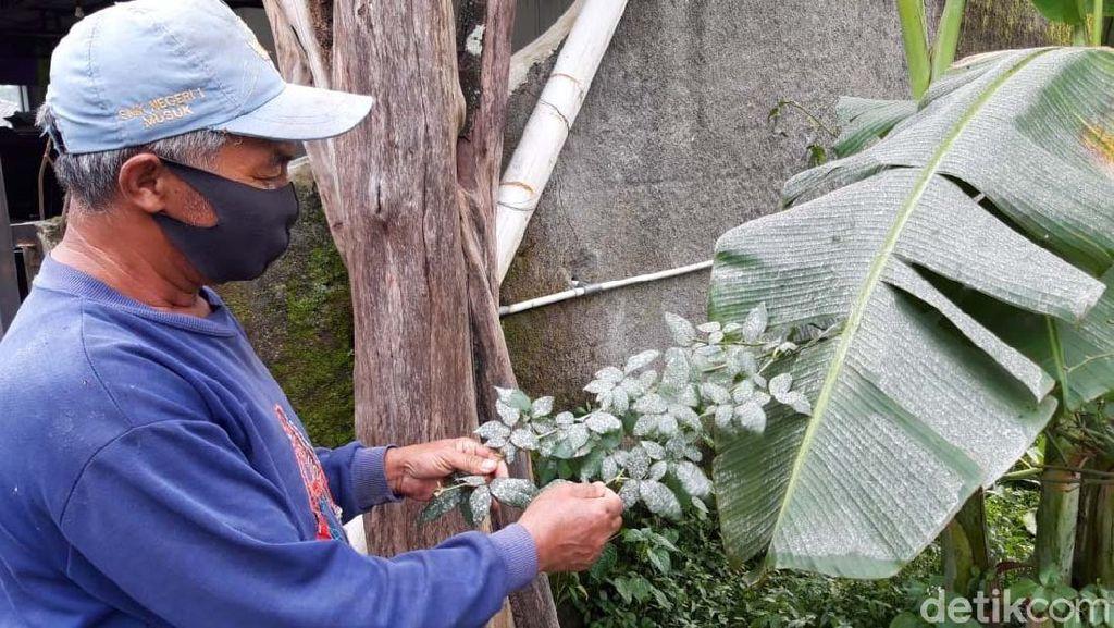 Dua Kecamatan di Boyolali Diguyur Abu Vulkanik Gunung Merapi