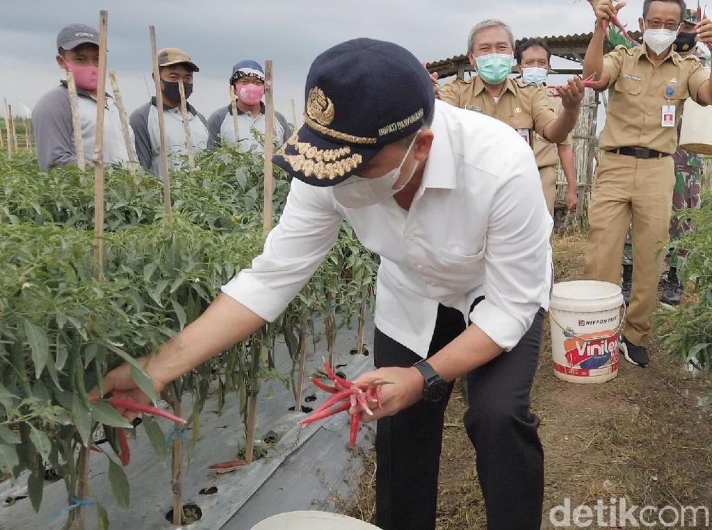 2021, Banyuwangi akan Bagikan Pupuk Organik Gratis 400 Hektare/Kecamatan