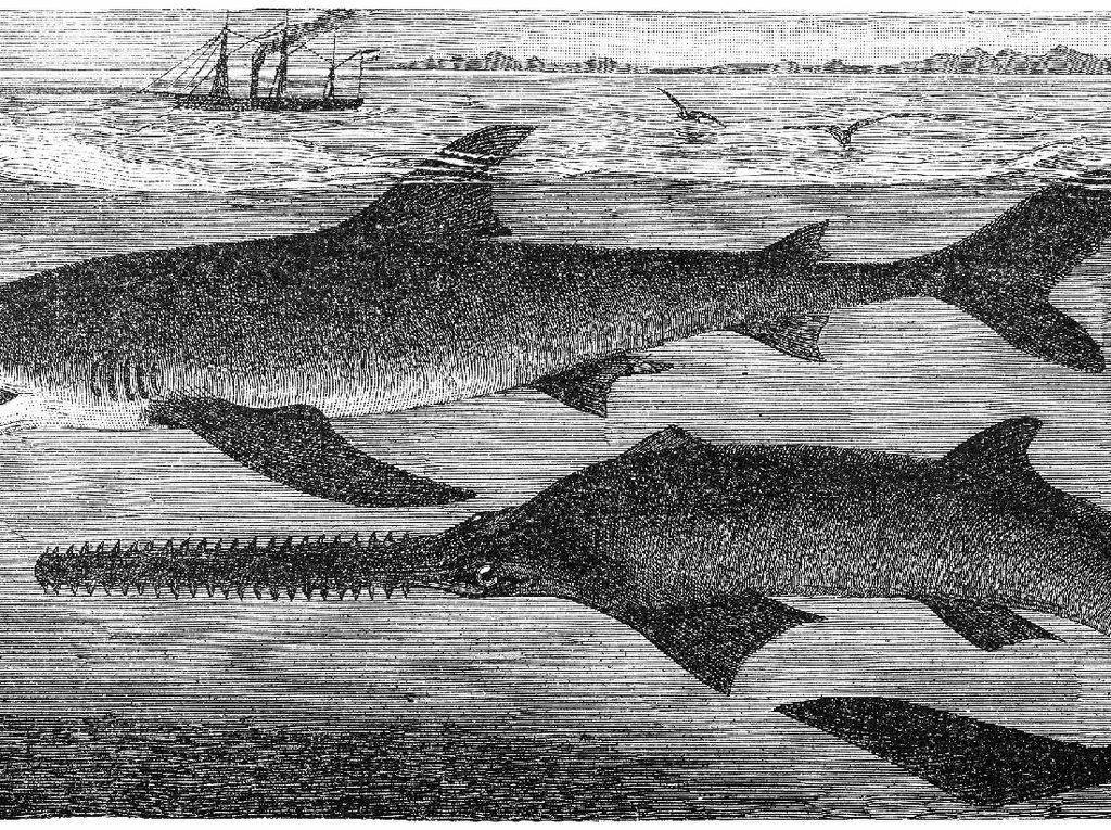 Ada Ikan Hiu Hidup di Danau Sentani, tapi Sayang Sudah Punah