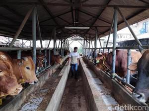 Apa Kabar Janji Jokowi Setop Impor Daging Sapi?