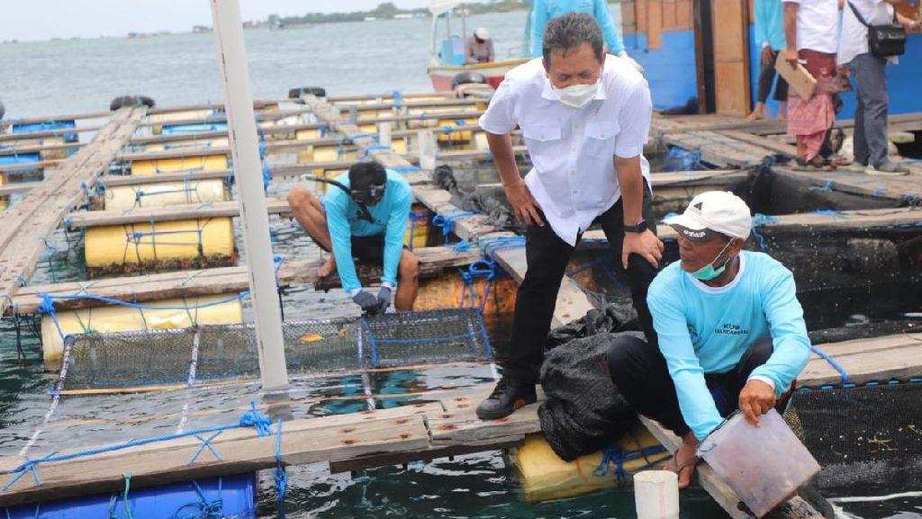 Tinjau Budidaya Lobster dan Perikanan di Bali