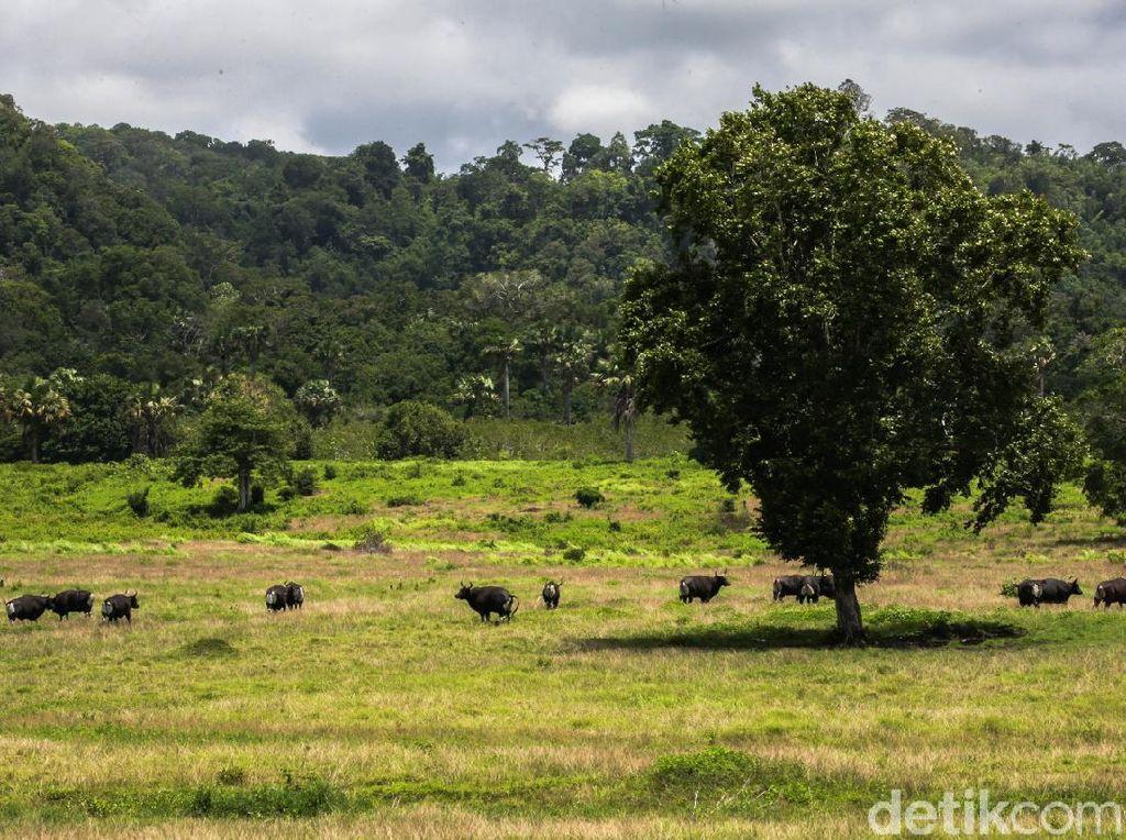Alas Purwo Adalah Cagar Biosfer UNESCO dan Geopark Nasional