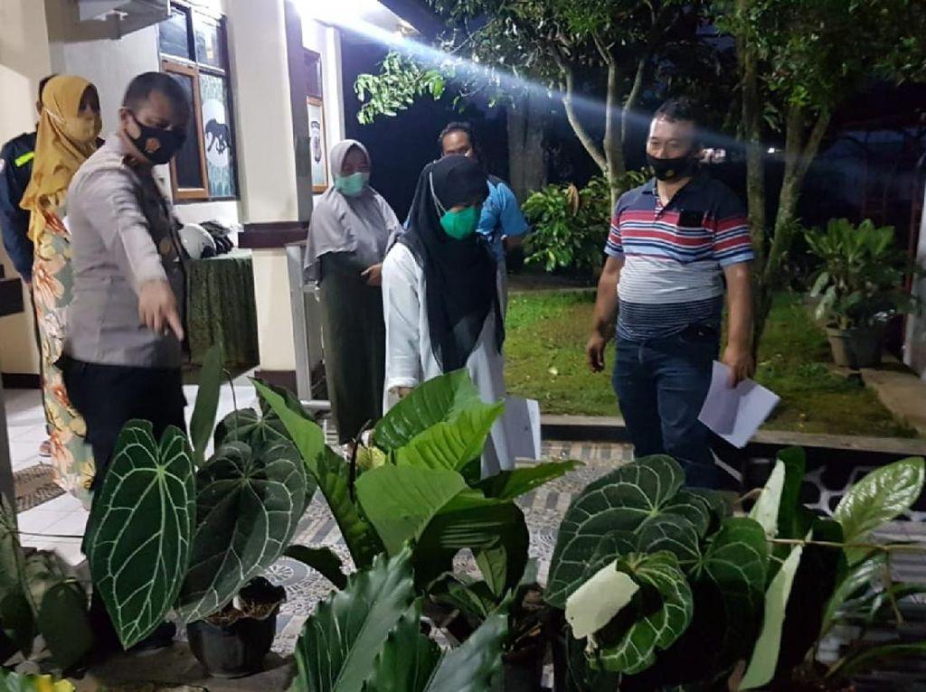 Pencuri Tanaman Janda Bolong di Sukabumi Nyaris Diamuk Massa