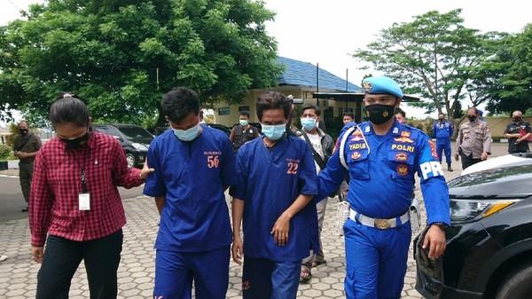Polisi tangkap pengedar benur ilegal di Lebak, Banten