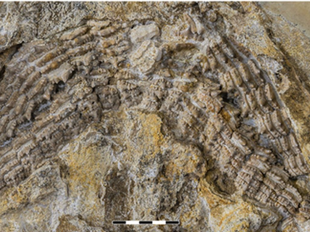 Percaya Tidak, Fosil Hiu Berusia 150 Juta Tahun Ditemukan di Jerman
