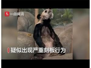 Giant Panda Ini Kurus Banget, Sampai Viral untuk Dipulangkan